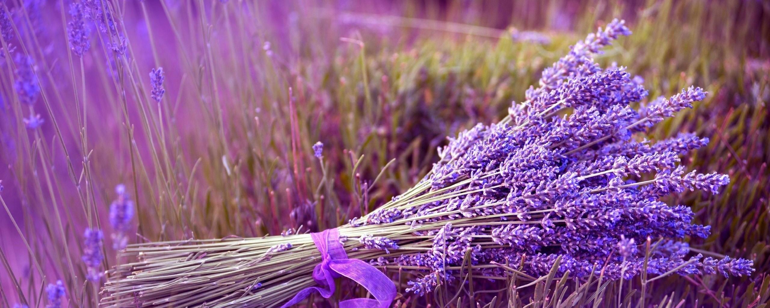 bouquet-of-lavender-HD-wallpaper