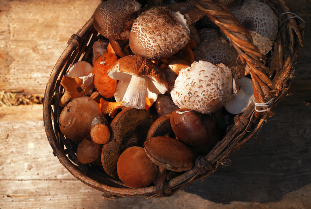 wild-mushrooms